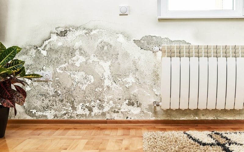 mold remediation pearland tx